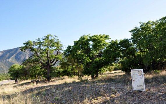the oaks field